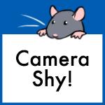 Adoptable baby rats